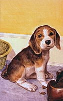 Friskie the Beagle Puppy Rev-H1902