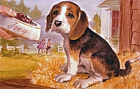 Friskie the Beagle Puppy sketch Rev-H1902