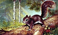 Perri the Squirrel Rev-H1900