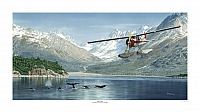 De Havilland Beaver Don Feight-960