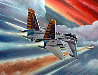 Grumman F-14 Tomcat by Mike Machat-960